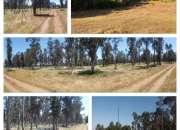 Parcelas en Parral 5000 mts - Rol propio - Agua potable y Luz