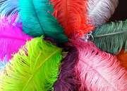 tintes individuales reales plumas de avestruz